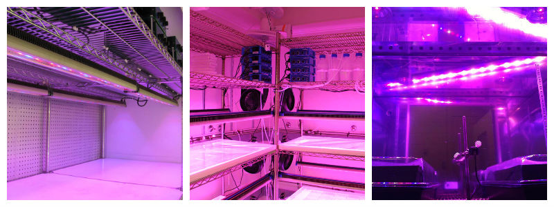 Growth Chamber LED Lighting