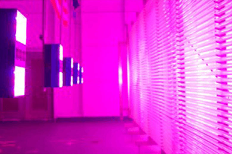 Algae to Omega pink LED grow lights on