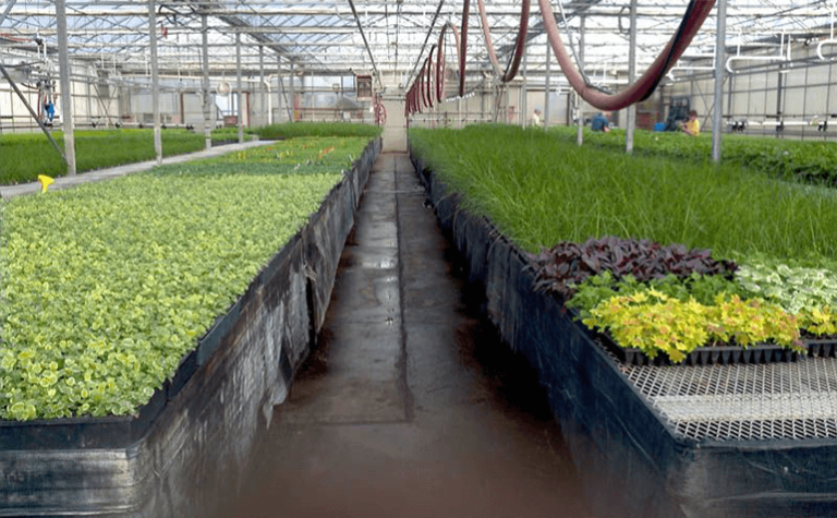 Barnes Greenhouses Improve Crop Vigor With LumiGrow