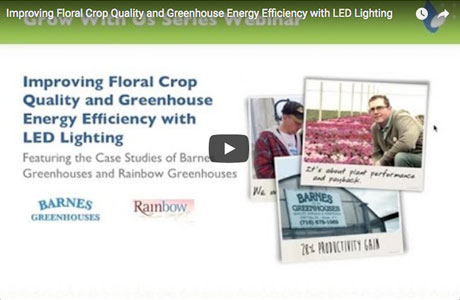 Improving Floral Crop Quality and Greenhouse Energy Efficiency with LED Lighting