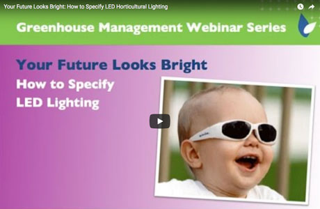 Your Future Looks Bright: How to Specify LED Lighting