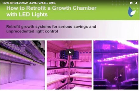 How to Retrofit Growth Chambers with LED Lights