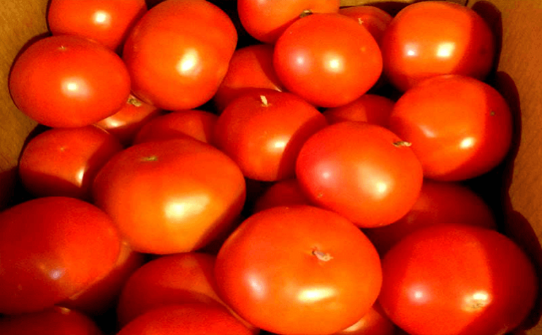 Patterson Greenhouses Increases Tomato Production and Accelerates Harvest
