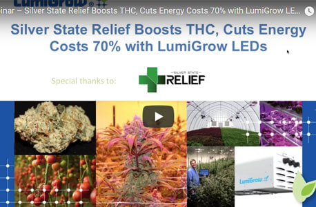 Silver State Relief Boosts THC, Cuts Energy Costs 70% with LumiGrow LED Grow Lights