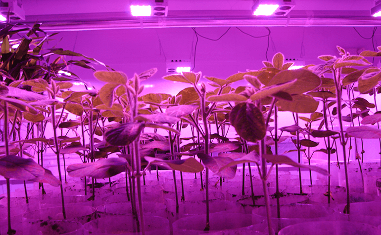 Reducing Climate Management Costs With LumiGrow