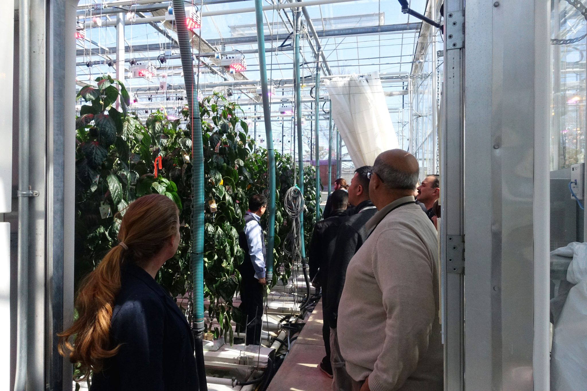 Latest Spectral Science Research Revealed at LumiGrow Ontario Growers' Council