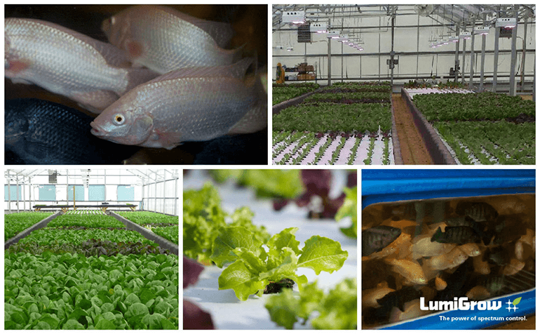 LumiGrow Helps Greenhouse Growers Fine Tune Lighting for More and Better Crops