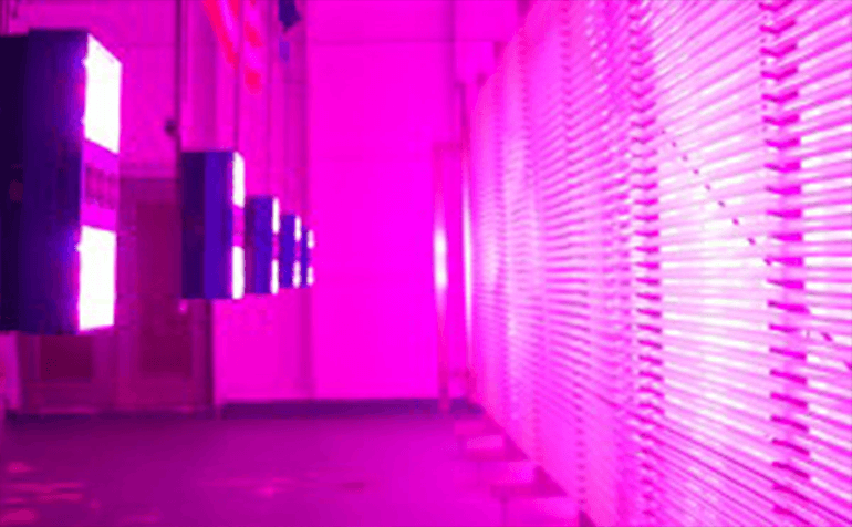 LumiGrow LED Grow Lights for Energy-Efficient Algae Farm