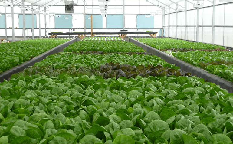 Aquaponics and LumiGrow Spectral Technology Get Along Swimmingly