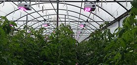 Increase Winter Tomato Production