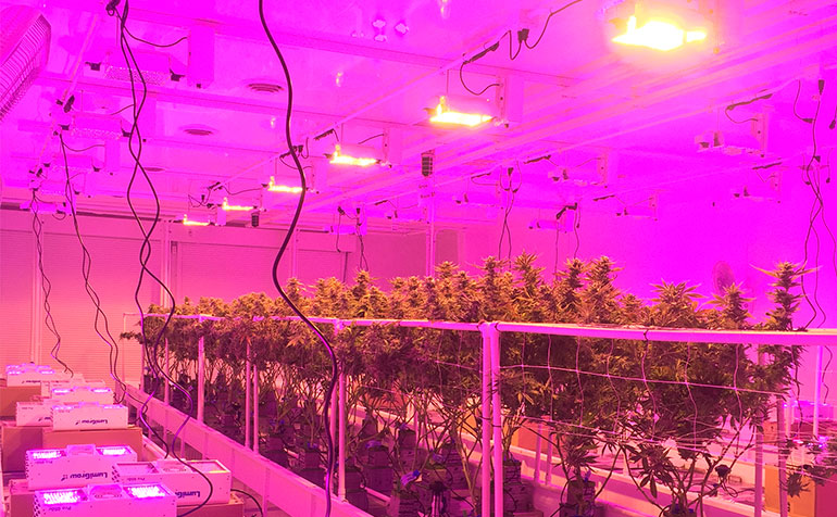 Colorado Grower Optimizes Cannabis Operation for Hot Climate