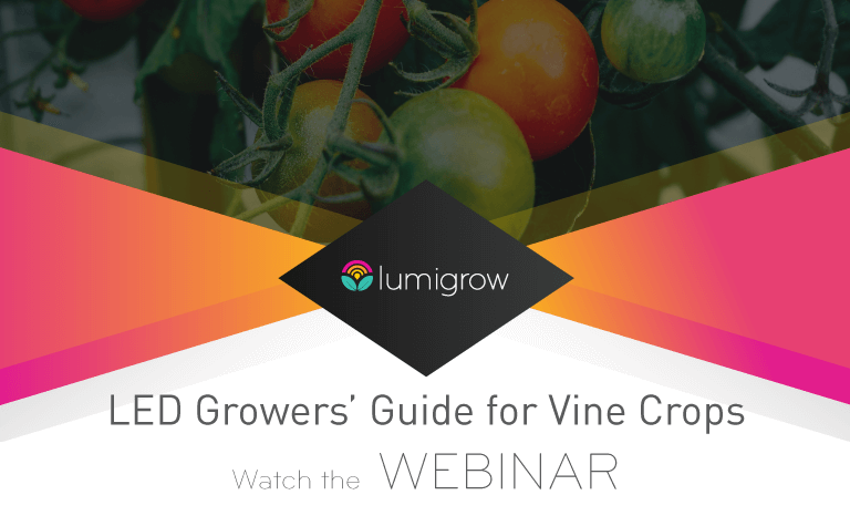 Learn How to Grow Vine Crops w/ LEDs