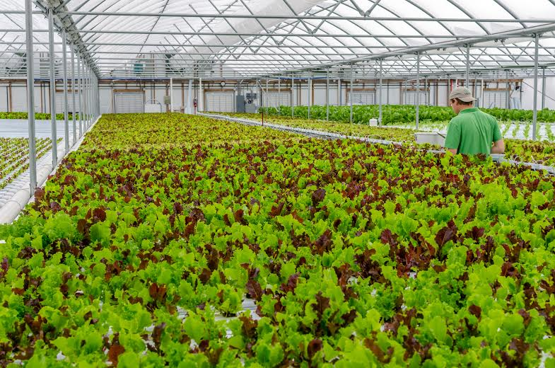 Lettuce Work Foundation Increases Winter Yields, Creating Opportunities for Young Adults with Autism to Thrive