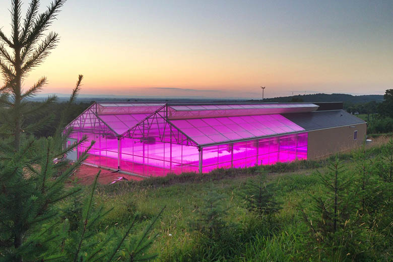 South Mountain MicroFARM Increases Lettuce Yield by 60% and Microgreens Yield by 10%