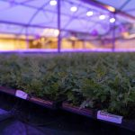 Casa Flora Greenhouse Inside LED grow lights on