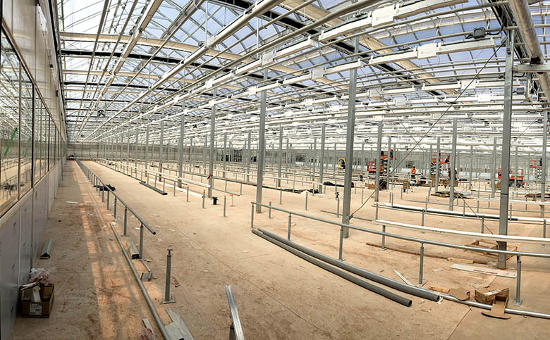 Major Canadian Licensed Cannabis Producer Installs LumiGrow LED Grow Lights for its 6-Acre Greenhouse