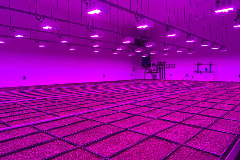 Resurrection Ranch's LumiGrow Lighting Brings Year-Round Produce to Rural Montana