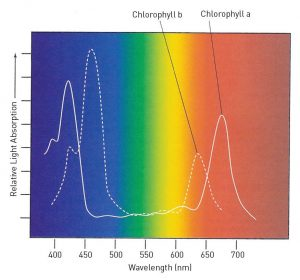 Color Spectrum for Chlorophyll
