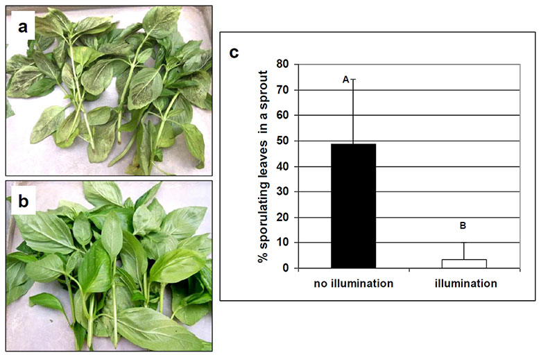 Image showing downy mildew suppression from PLoS