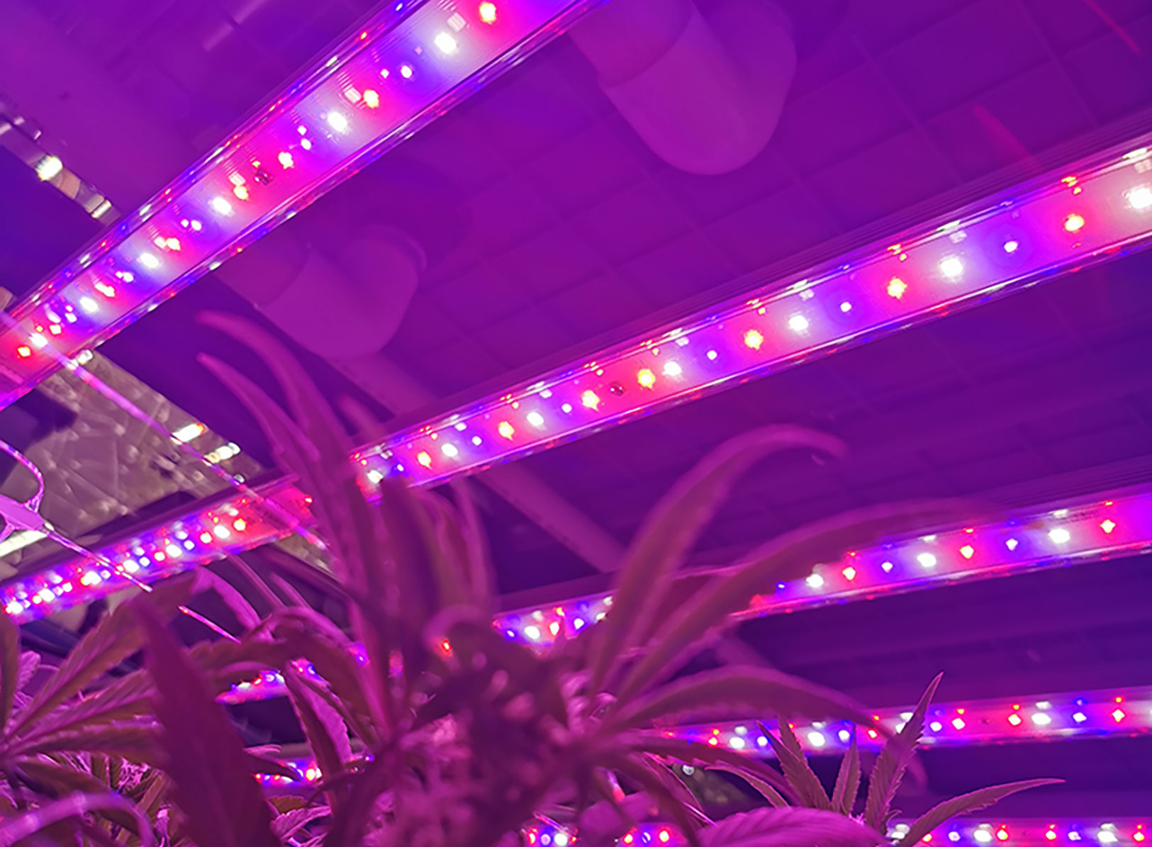 vertical-cannabis-grow-system-with-led-grow-lights