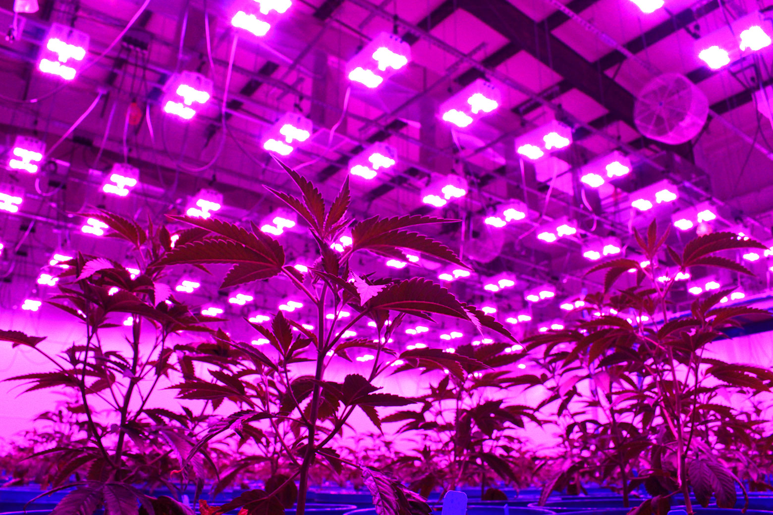 led-grow-lights-hang-over-plant